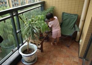 Hjälp med att vattna träden på balkongen igen!