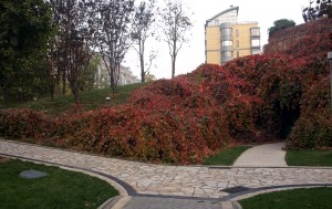 Höstbilder från bostadsområdet i Beijing