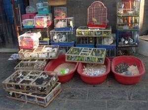 Husdjur till salu