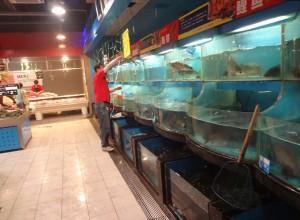 Fisken plockas upp