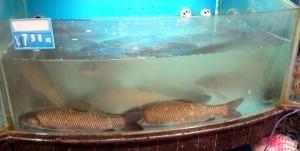 Andra fiskar till salu
